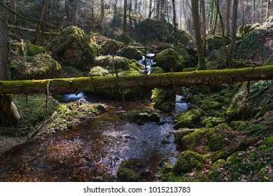 Enchanted forest in Switzerland on a sunny summer day with a tiny gin clear mountain creek running over mossy boulders and dead wood. Forest landscape, nature lover, solitude, freedom, peaceful
