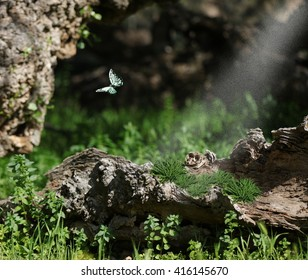 The enchanted forest.  A woodland forest with giant logs and vegetation capture a mystical scenic experience with a teal butterfly and sun sprinkles.
