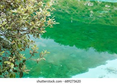Enchanted Lake. The crystalline waters of Cornino Lake. Friuli