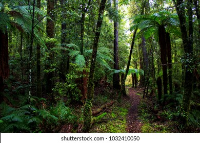 Enchanted rainforest in New Zealand