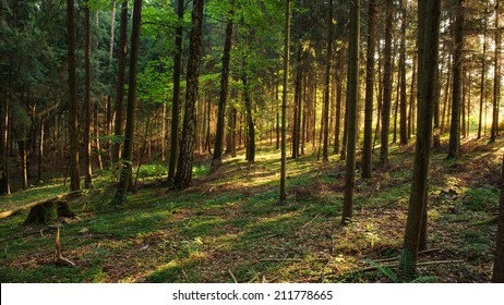 Enchanted Summer Morning Forrest in Germany. Sunrays shining through the woods
