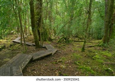 The enchanted walk in world heritage cradle mountian area tasmania