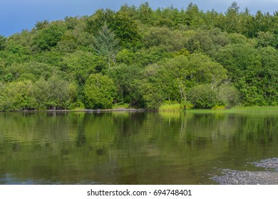 Enchanted woods and tranquil water of Loch Gowna, in Ireland.