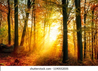 Enchanting autumn light in a forest, with vivid rays of gold light falling through the trees unto the ground