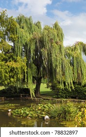 Enchantingly beautiful park-garden Sigurta. Shallow pond, weeping willows and lily