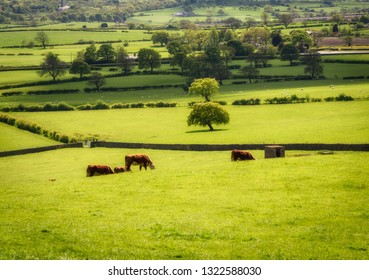 An enclave of grazing land in UK