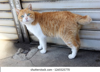 Encounter a Japanese cat on the street