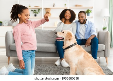 Encouragement Concept. Portrait of smiling African American girl playing with dog, feeding golden retriever with treats, training pet at home in living room, parents sitting on sofa, selective focus