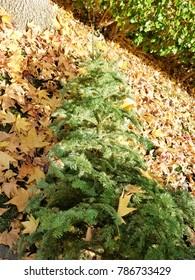 End of 2017 wirh Christmas Tree
