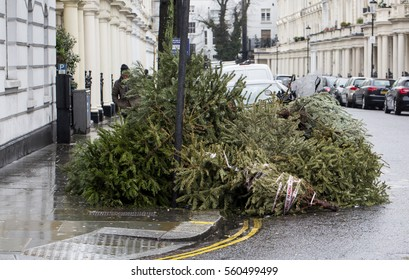 End of Christmas. Christmas trees, used and abandoned wait for collection by the local council on the street. This is an indication of th end of the Christmas season celebrations.