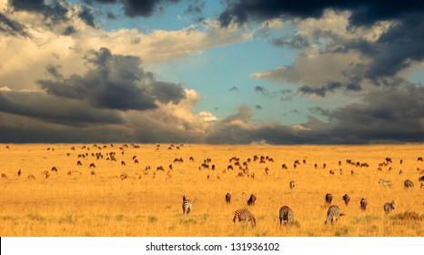 End of the Great Migration - Serengeti National Park, Kenya