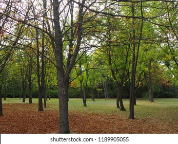 The end of summer and the beginning of autumn in one photo. Dry leaves and green grass at the same time.