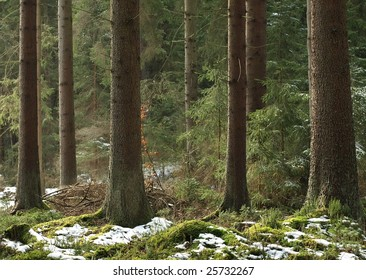 End of winter in the forest