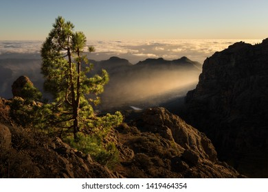 Endemic conifer on a mountain before a sunset on Gran Canaria, Canarian islands