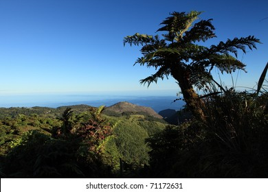 Endemic Tree fern on remote St Helena Island