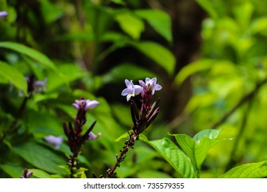 Endemic and unique tropical and equatorial plants and flowers of Seychelles islands