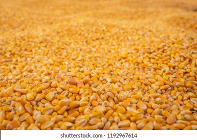 Endless Corn Kernel Harvest