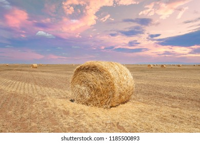 Endless fields of hay bails. Agricultural fields of hay bails