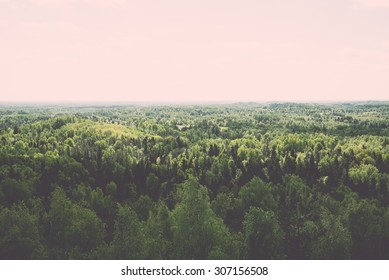 Endless forests in sunny day with perspective in color - vintage retro style effect