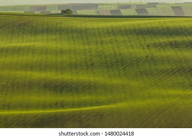 Endless green fields during spring sunrise. Amazing lines and shadows. Agriculture and farming life in southern Moravia.