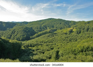 Endless green forests and hills