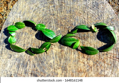 Endless / infinity symbol made from ever-green leaves. The concept of eternity, endless and unlimited, circular economy.  Green leaves on a wooden log.