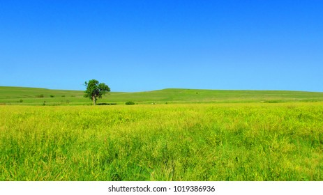 The Endless Prairie in Summertime