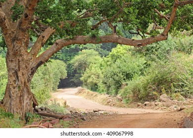 Endless road in the forest of Lake Manyara National park in Tanzania
