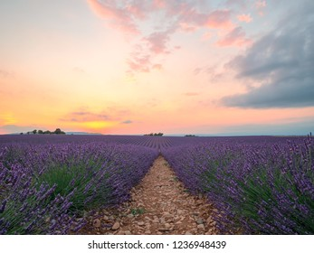 Endless rows of blooming lavender flowers in a scented field of Valensole village and dramatic sunset sky over a field, Provence, France.