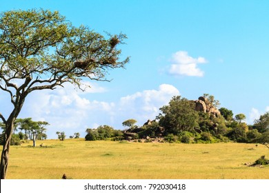 Endless savanna of Serengeti. Hill and trees and blue sky. Tanzania, Africa