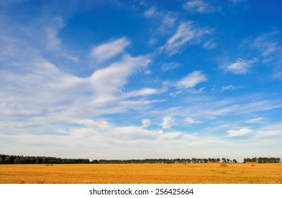 endless sky over the yellow harvested field