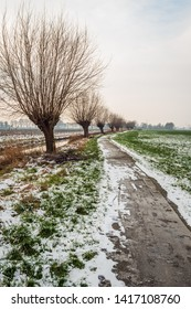 Endless-looking bicycle and hiking trail in winter. Along the path is a row of pollard willows. The thaw has begun. The photo was taken near the Dutch village of Drimmelen, North Brabant.