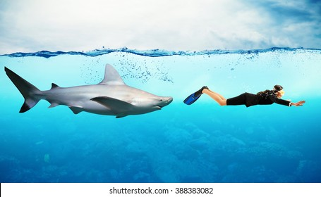 Great White Shark Enemies | Killer Shark Images Stock Photos Vectors Shutterstock