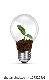 Energy saving concept, plant growing in electric light bulb, isolated on white background.