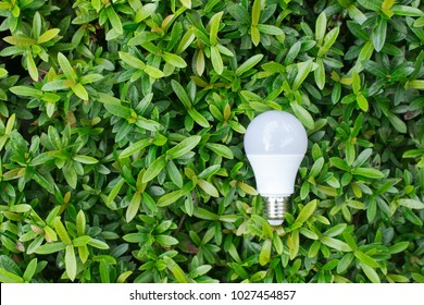 Energy saving  LED Bulb with lighting in the green nature background . Copy space . - Eco concept