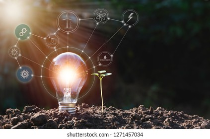 Energy saving light bulb and tree growing on nature background for energy and creative concept.