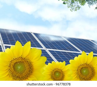 Energy solar in friendly sunflowers