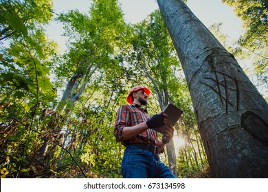 The engineer checks the trees with the tablet