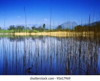 england cumbria lake district national park far sawrey near where beatrix potter lived - blelham tarn high wray estate