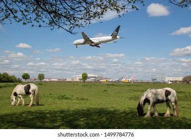 England/London March 12th 2019 Planes landing at London Heathrow Airport. A plane flies directly over a field containing horses as it approaches London Heathrow Southern runway (27L) before landing.