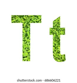 English alphabet of T. made from green grass on white background for isolated with clipping path, Capital letter and small letter  from green grass on white background for isolated