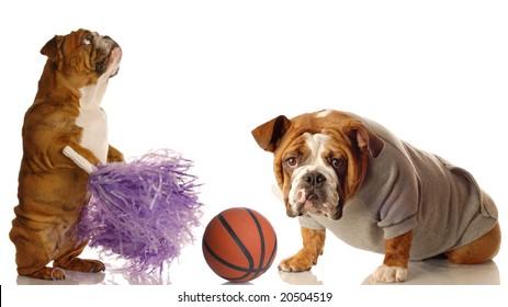english bulldog cheerleader and basketball star isolated on white background