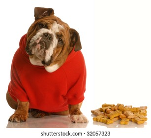 english bulldog with cute expression sitting beside pile of dog bones