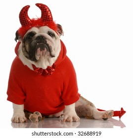 english bulldog dressed up as a devil