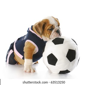 english bulldog puppy female wearing sports jersey playing with soccer ball 3d0ca18ca