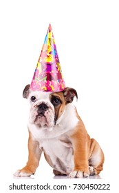 english bulldog puppy wearing nice paper hat over white