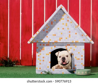 english bulldog sitting in dogs house
