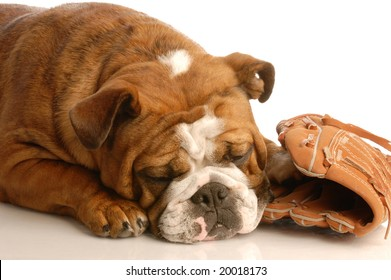 english bulldog sleeping with baseball and baseball glove