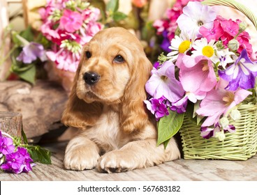 English Cocker Spaniel puppyfnd flowers in basket