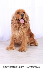 English cocker spaniel in room